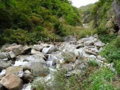 仙人谷にかかる丸木橋