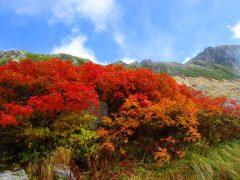 剱沢の見事な紅葉