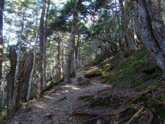 シラビソ林の登山道